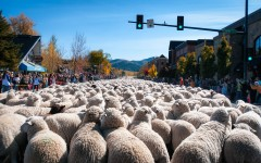 Basques play significant role in Trailing of the Sheep Festival