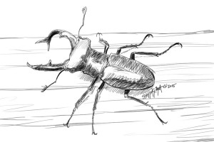 Stage beetle cerf volant insecte